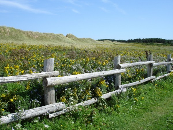 Fence near the Cavendish beach